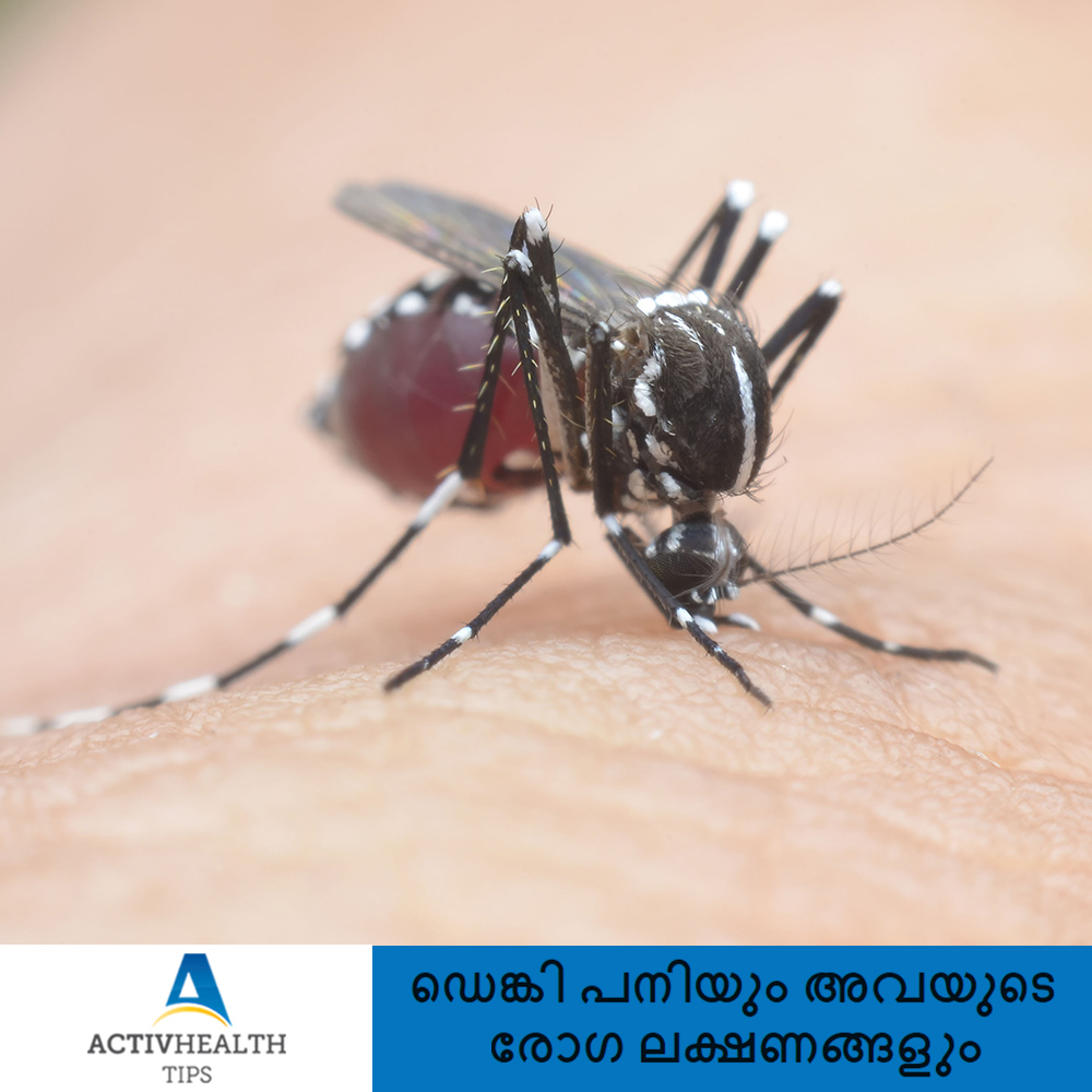 Dengue Prevention Malayalam