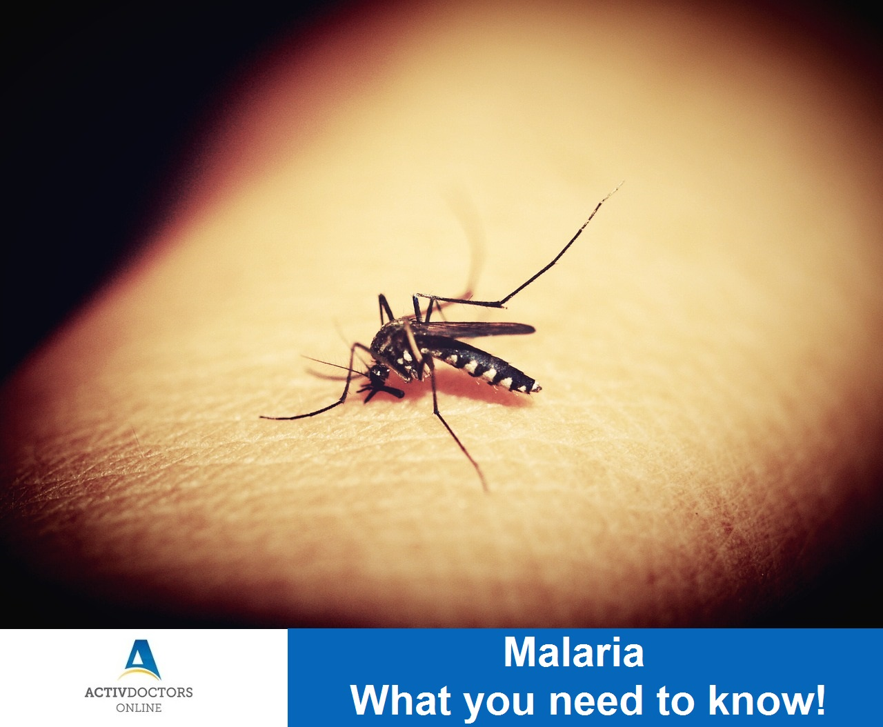 Malaria – What you need to know!