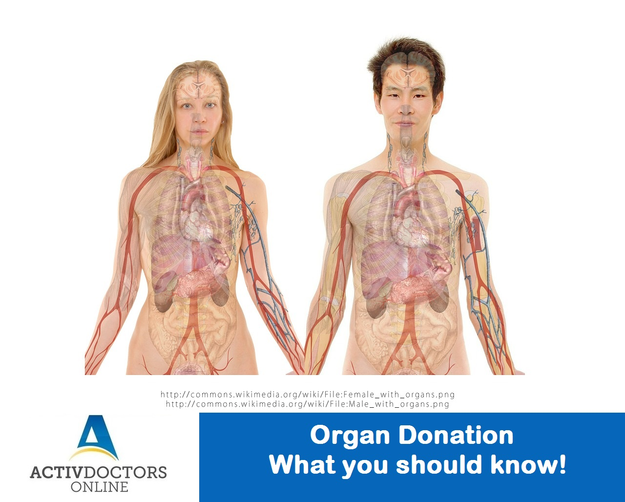 Organ Donation - What you should know!