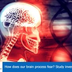 How does our brain process fear? Study investigates