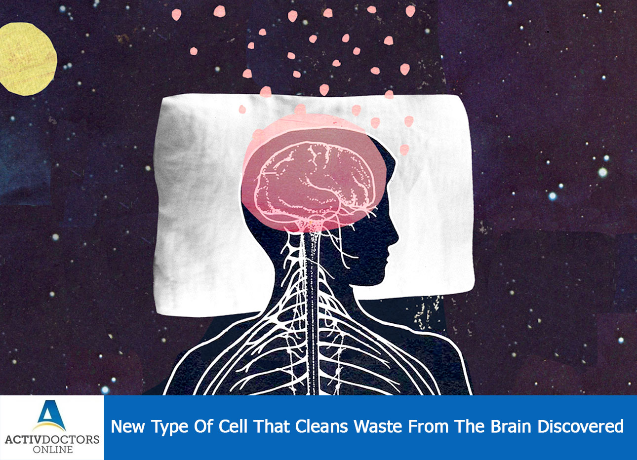 NEW TYPE OF CELL THAT CLEARS WASTE FROM THE BRAIN DISCOVERED