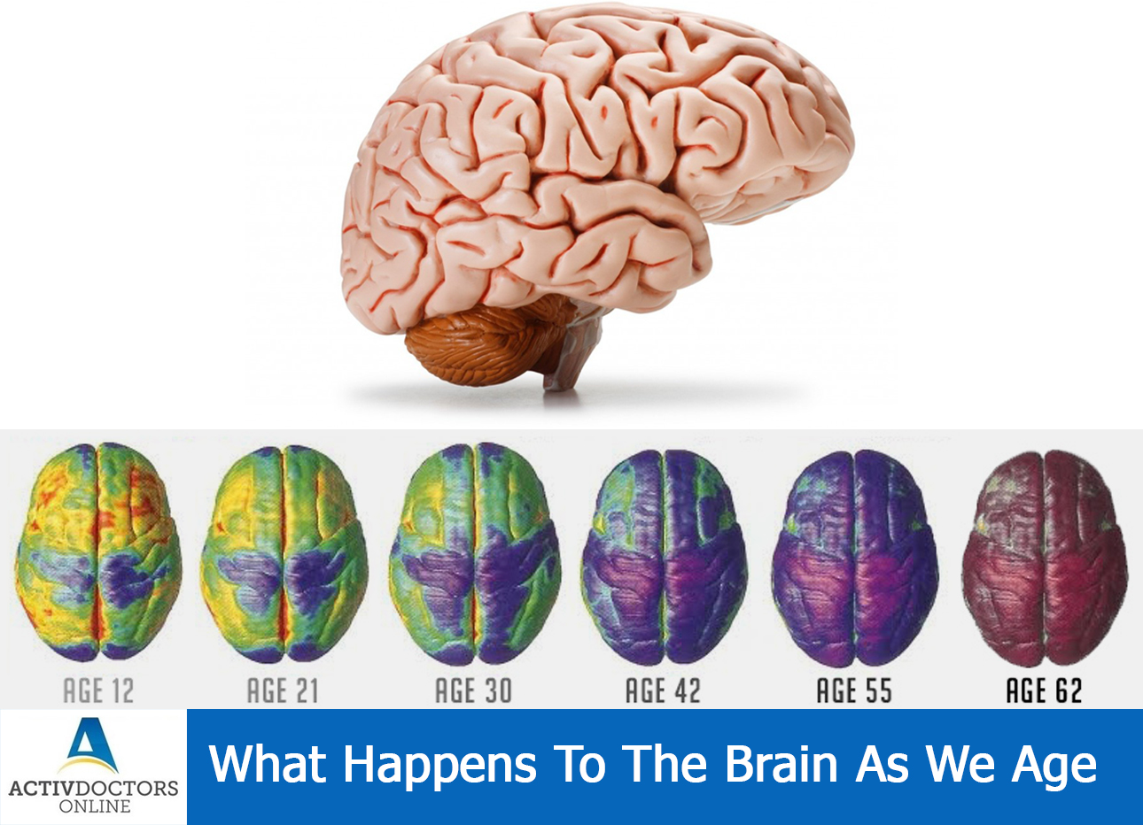 What Happens To The Brain As We Age ??